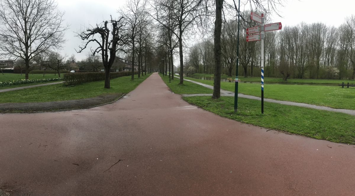 A path with trees on the side of a roadDescription automatically generated